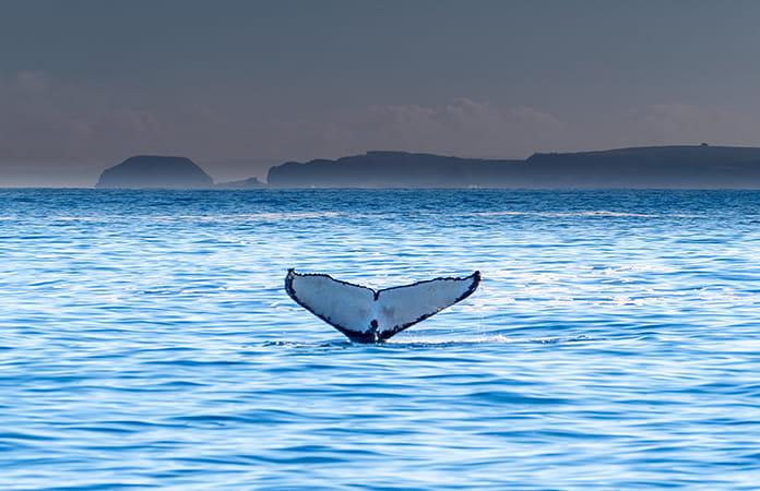 フィリップ島