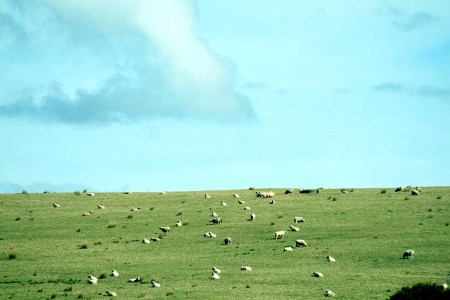 海外の農業と自然を体感できる「ファームステイ」の基本情報