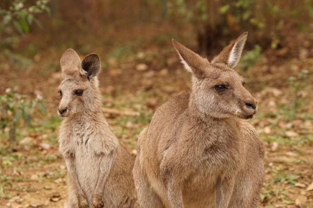 3.オーストラリア独特のクリスマス行事