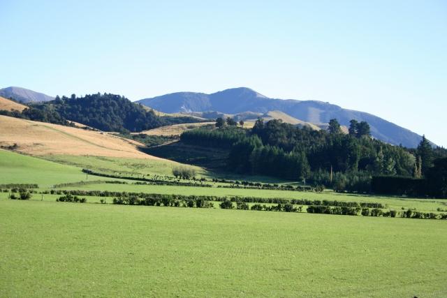 自然を満喫できる!ニュージーランドファームステイの魅力