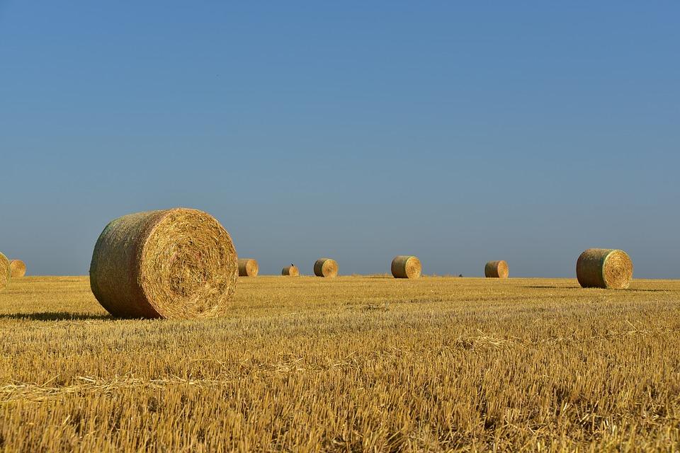 オーストラリアは農業生産輸出大国!