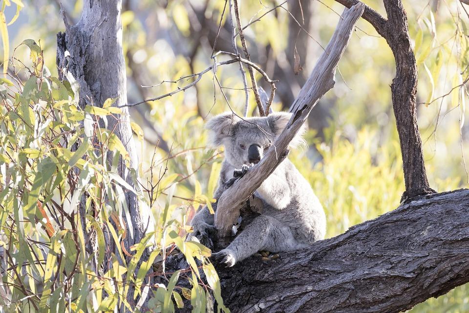 オーストラリアの自然を満喫できるスポットその①:森林編