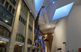 カナダトロント 観光名所 ロイヤルオンタリオ博物館 エミリーのEnglish留学日記