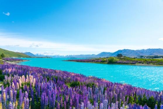 【留学体験談vol.12】ニュージーランド留学の魅力とは?【短期留学】