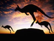 【オーストラリア アニマルガイド】生きた化石!カンガルー